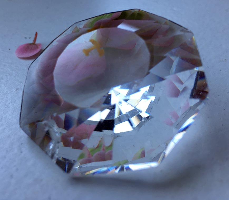 prism and flower petals